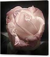 Gothic Rose Canvas Print
