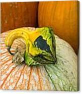 Gourd Pair Canvas Print