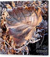 Graced By Frost Canvas Print