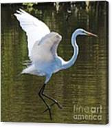 Graceful Great Egret Flying Canvas Print