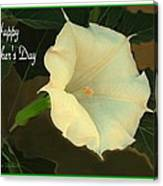 Graceful Moonflower - Happy Mother's Day Canvas Print