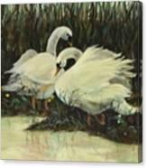 Graceful Swans Canvas Print