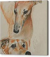 Graciously Greyhound Canvas Print