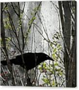 Grackle Bush Canvas Print