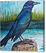 Grackle By The Water Canvas Print