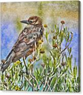 Grackle In Flowers Canvas Print