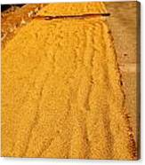Grain Drying Canvas Print