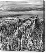 Grain Field Tracks Canvas Print