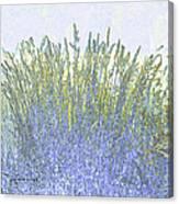 Grains Canvas Print