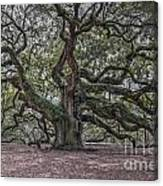 Grand Angel Oak Tree Canvas Print