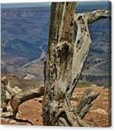 Grand Canyon And Dead Tree 2  Canvas Print