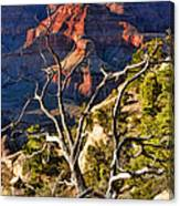 Grand Canyon Branches Canvas Print