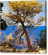 Grand Canyon National Park And Tree Canvas Print
