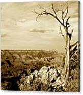 Grand Canyon Sepia Canvas Print