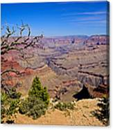 Grand Canyon South Rim Trail Canvas Print