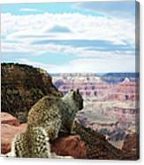 Grand Canyon Squirrel Canvas Print
