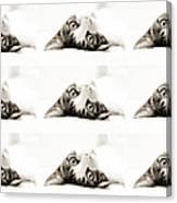 Grand Kitty Cuteness Bw 9 Canvas Print