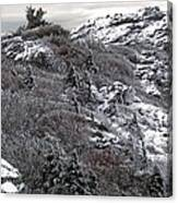 Grandfather Mountain's Linville Peak  Canvas Print