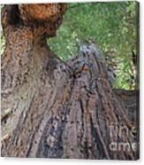 Grandfather Redwood Tree Canvas Print