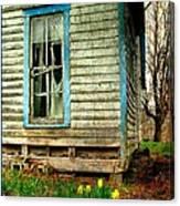 Grandma's Daffodyls Canvas Print