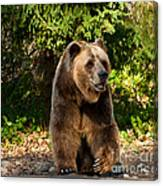 Grandpa Bear Canvas Print