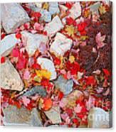 Granite Rocks Among Maple Leaves Canvas Print