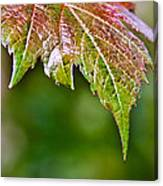 Grape Autumn Leaf Canvas Print