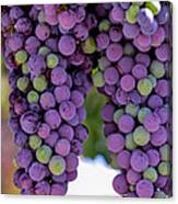 Grape Bunches Portrait Canvas Print