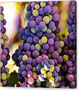 Grape Bunches Wide Canvas Print