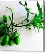 Grape Tomatoes Canvas Print