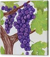 Grape Vine Canvas Print