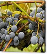 Grape Work Canvas Print