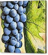 Grapes 2 Canvas Print
