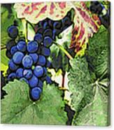 Grapes 3 Canvas Print