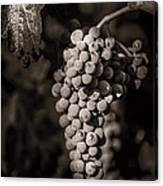 Grapes In Grey 4 Canvas Print