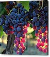 Grapes With Bokeh Canvas Print