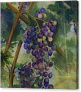 Baby Cabernets II   Triptych Canvas Print