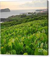 Grapevines And Islet Canvas Print