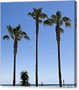 Graphic Image Of Palm Trees Blue Sky At Seaside Canvas Print