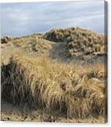 Grass And Sand Dunes Canvas Print