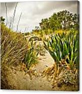 Grass And Sand Of Elafonisi Canvas Print