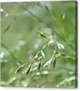 Grass Blade Canvas Print