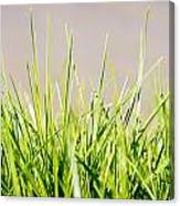 Grass Blades Canvas Print