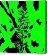 Grass Bloom Variations 6 Canvas Print