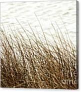 Grass Down By The Shore Of Virginia Beach Canvas Print