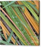 Grass Droplets Canvas Print