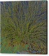 Grass Effects-2 Canvas Print