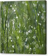 Grass Fairies... Canvas Print