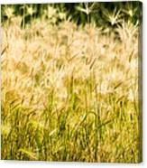 Grass Feathers Canvas Print