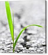 Grass In Asphalt Canvas Print